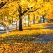 5 consejos para poner tu vehículo a punto para el otoño